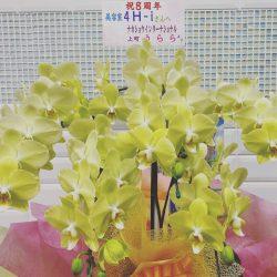 2020.07.21黄色胡蝶